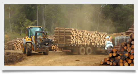 Brazil's Forest Products Industry Performance for 1Q2015