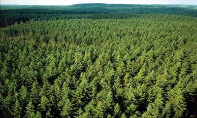 Sweden_Forest