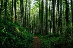 trees-698456_1280