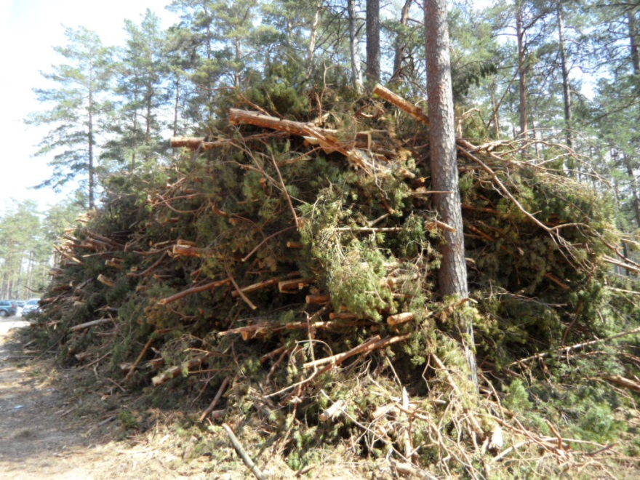 Baltics_Wood_2.jpg
