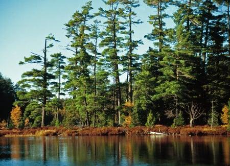 Ottawa National Forest, Sylvania Wilderness, Michigan