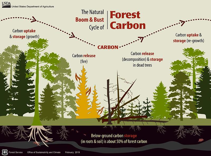 USFS_Carbon