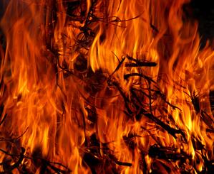 burning-tree-in-time-lapse-36851