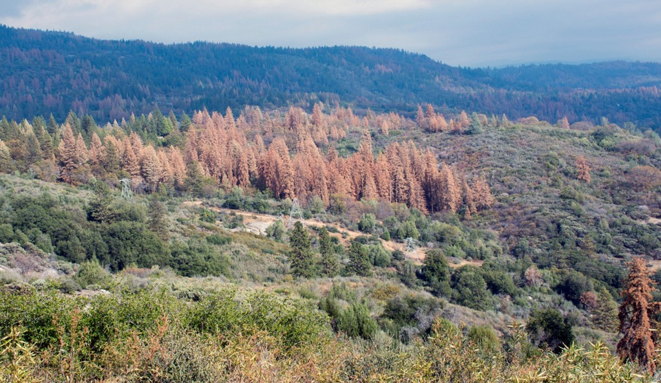 tree-mortality-in-california-credit-cal-fire.jpg