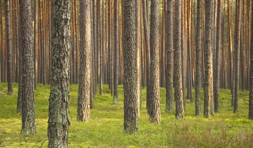 How Many Tons of Wood are on an Acre of Land?