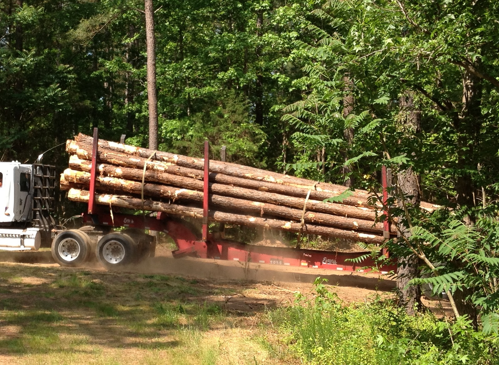 Five (and a half) Factors That Impact Timber Prices