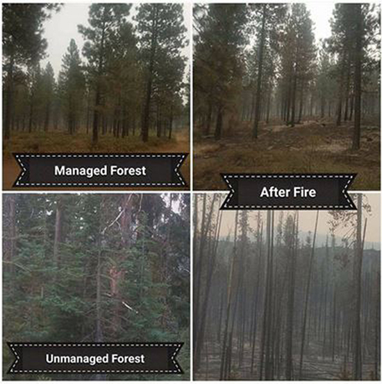 damage to forest from wildfire